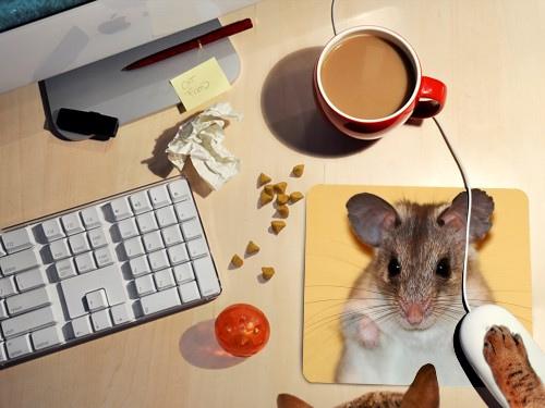 akcesoria komputerowe zebrane na biurku - podkładka pod myszkę z myszką, czerwony kubek z mleczną kawą, klawiatura monitor i kot